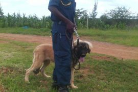 hhour_security_gaurd_plus_dog